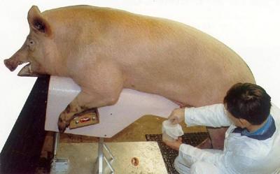 动物繁殖学